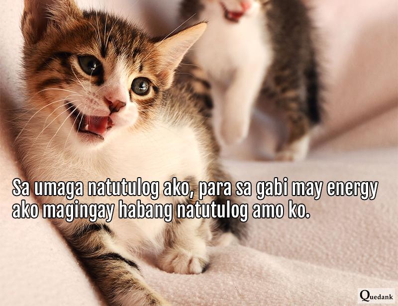 Funny Cat - Nakakatawang pets natin na pusa - Pinoy Meme