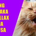 WATCH: Ang Pinaka Chillax Na Pusa