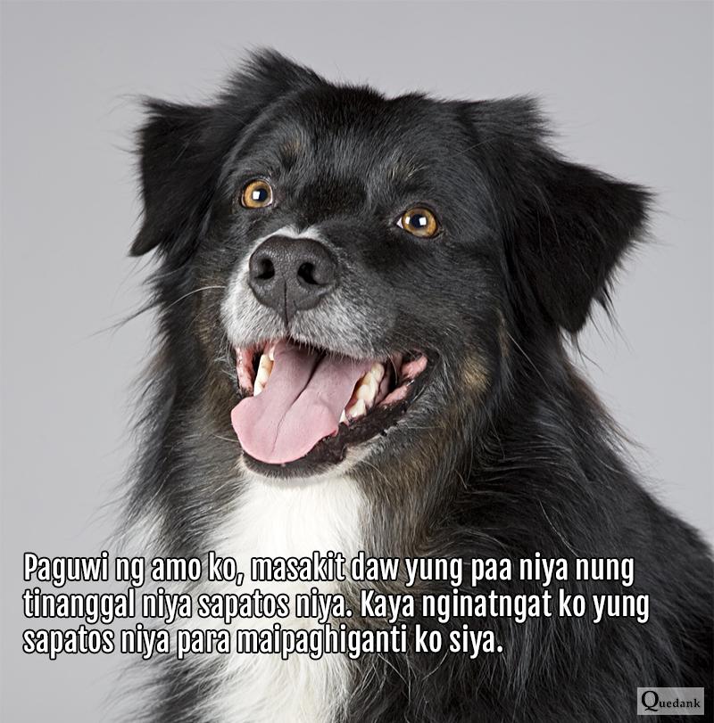 Funny Dog - Nakakatawang pets natin na aso - Pinoy Meme