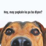 PICTURES: Paano Kung Matuto Magsalita Pets Natin?